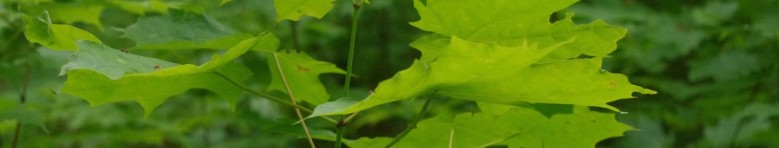 cropped-green-leaves-2000x380-v2.jpg