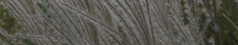 cropped-more-grass-2000x380-v-2.jpg