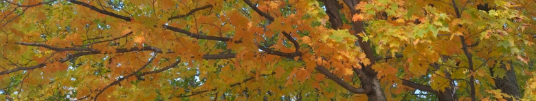 Fall leaves 2000x380 v2