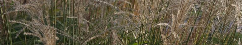 Grass 2000x380